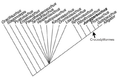 Cladogram of crocodylomorphs.png
