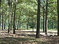 Cold Harbor Battlefield - panoramio.jpg