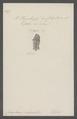 Coleophora - Print - Iconographia Zoologica - Special Collections University of Amsterdam - UBAINV0274 058 14 0002.tif