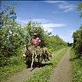 Collectie Nationaal Museum van Wereldculturen TM-20030068 Het vervoer van landbouwproducten per ezel Sint Eustatius Boy Lawson (Fotograaf).jpg
