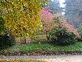 Colourful Leaves, Batsford Arboretum - geograph.org.uk - 1539018.jpg
