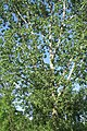 Cottonwood 2016-05-29 101.jpg
