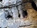Cova d'en Marc P1070445.JPG