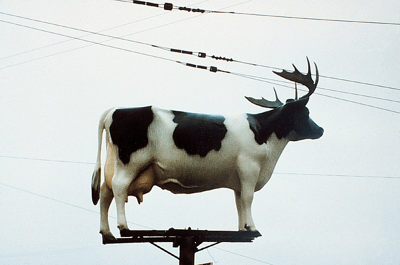 File:Cow-on pole, with antlers.jpeg