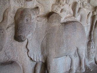 Cattle in religion and mythology - A bull bas relief in Mamallapuram.