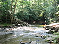Crabtree Creek Company Mill Trail Umstead NC SP 0097 (3583859406).jpg