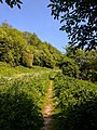 Creswell Gorge, Creswell Craggs, Notts (33).jpg
