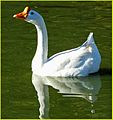 Critters and Birds - 2014 (2) (13723561155).jpg