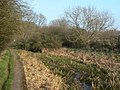Cromford Canal near Lower Hartshay - geograph.org.uk - 1211759.jpg