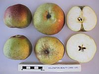 Cross section of Dillington Beauty, National Fruit Collection (acc. 1953-137).jpg