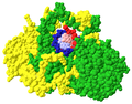 Crystal Structure of the Ku Heterodimer - 23.png