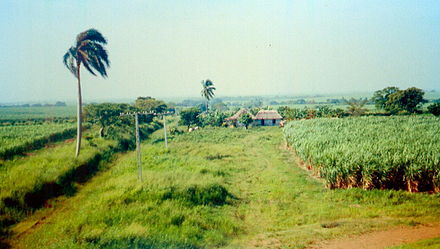 Sugarcane plantation in rural Cuba - Plantation