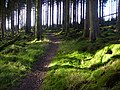 Cycle trail through Newcastleton Forest - geograph.org.uk - 608676.jpg