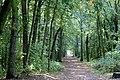 Dölau (Halle (Saale)), Waldweg in die Dölauer Heide.jpg