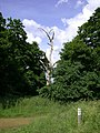 Dead tree by Icknield Way - geograph.org.uk - 833321.jpg