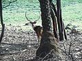 Deer DSCN2496.jpg