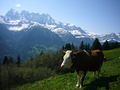 Dents du Midi vom Val d'Illiez.jpg