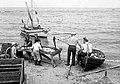 Depecage de la morue a Perce . Comte de Gaspe - 1948.jpg