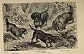 Der Hund und seine Racen. Naturgeschichte des zahmen Hundes, seiner Formen, Racen und Kreuzungen (1876) (20852805662).jpg