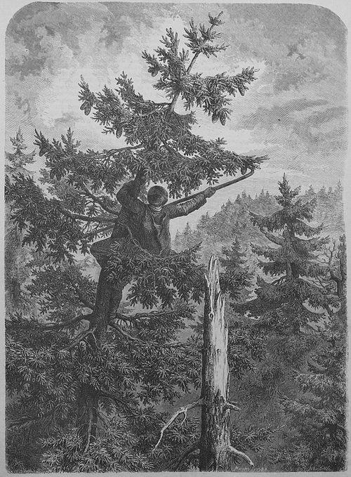 Die Gartenlaube (1867) b 133.jpg