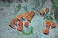 Diorama of a Carboniferous seafloor - rugose corals (45606187781).jpg