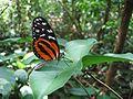 DirkvdM butterfly panama.jpg