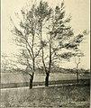Documentary journal of Indiana 1905 (1905) (14577049970).jpg