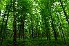 Doering Woods.jpg