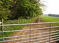 Dog Kennel Piece Plantation - geograph.org.uk - 447849.jpg