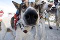 Dog Nose (4269788249).jpg