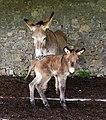 Donkeys in Italy.jpg