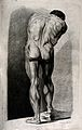 Drawing of a male nude, back view Wellcome V0008859.jpg