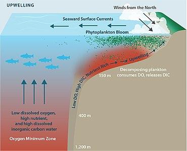 Ocean acidification - WikipediaWikipedia