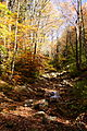 Dry-fall-creek - West Virginia - ForestWander.jpg