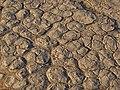 Dry mud at Sossusvlei.jpg