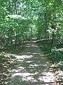 Dunn's Woods pathway.jpg