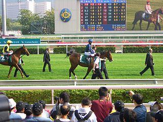 Dylan Thomas (horse) Irish-bred Thoroughbred racehorse