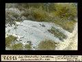 ETH-BIB-Les Combettes, Landeron, Gletscherschliff von Ost-Nordost-Dia 247-13573.tif