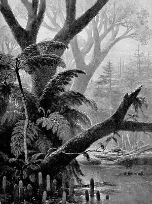 Coal forest - Coal forest of tree ferns and lycopod trees, in a 1906 artist's rendering