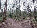 Eccleshall Woods. - geograph.org.uk - 111027.jpg