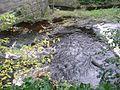 Edinburgh - Water of Leith - Streams (2961546059).jpg