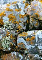 Eilean na Ba Mor - geograph.org.uk - 74092.jpg