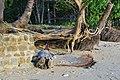 El Nido, Palawan, Philippines - panoramio (70).jpg