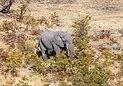 Elefante africano de sabana (Loxodonta africana), vista aérea del delta del Okavango, Botsuana, 2018-08-01, DD 34.jpg