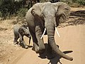 Elephant mother and baby.jpg