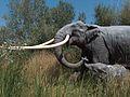 Elephasantiquus.jpg