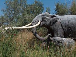 Reconstitution d'un éléphant à défenses droites, avec son petit