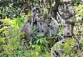 FLora and fauna of Chinnar WLS Kerala (63).jpg