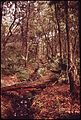 FOREST ON ST. SIMON'S ISLAND. PART OF THE ISLAND'S FOREST LAND IS BEING CLEARED FOR A GOLF COURSE - NARA - 547011.jpg