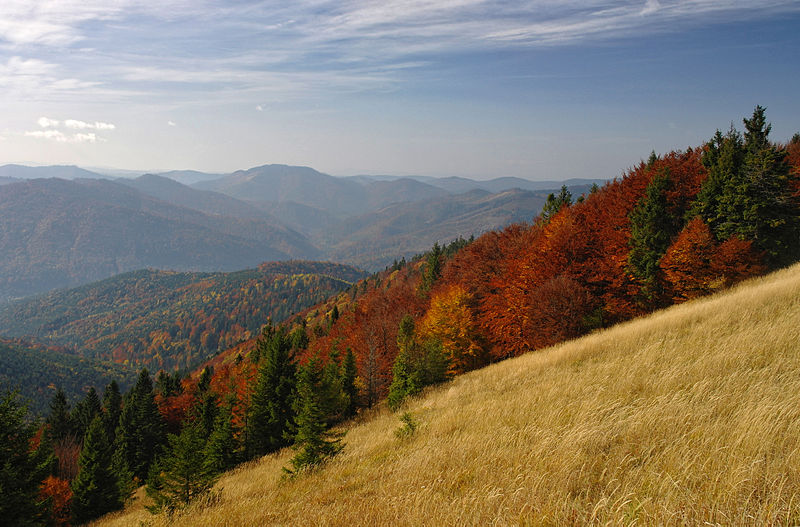 Осінь в Сколівських Бескидах. Автор фото — Сергій Криниця (Haidamac), ліцензія CC-BY-SA-4.0